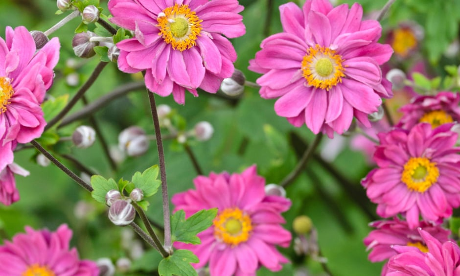 Why anemones are all about no-fuss thrills